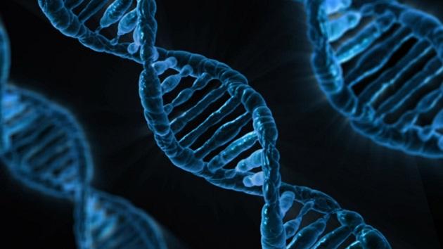genetik-tespit-kiti