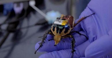 robot-böcekler