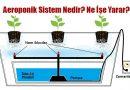 Aeroponik (Akan Su Kültürü) Sistemi Nedir? Ne İşe Yarar?