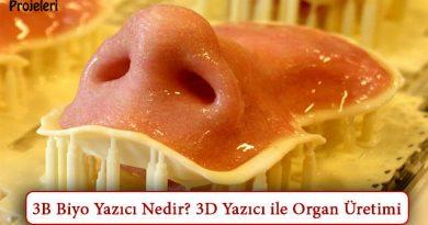 3B Biyo Yazıcı Nedir? Nasıl Çalışır? 3D Yazıcı ile Organ Üretimi
