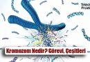 Kromozom Nedir? Görevi, Çeşitleri ve Özellikleri
